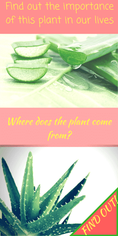 Aloe Vera all you need to know about her